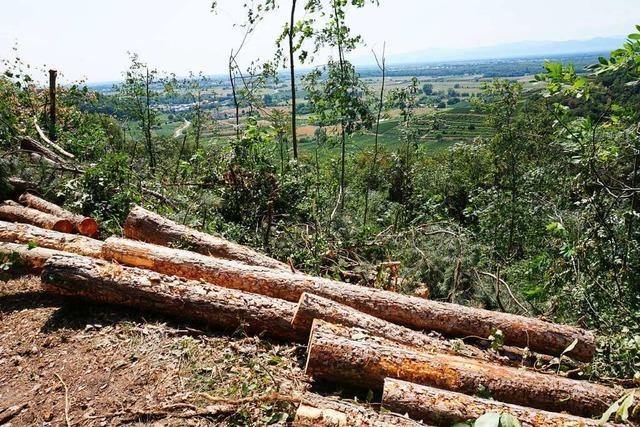 Damit der Wald überlebt, müssen die Menschen umdenken
