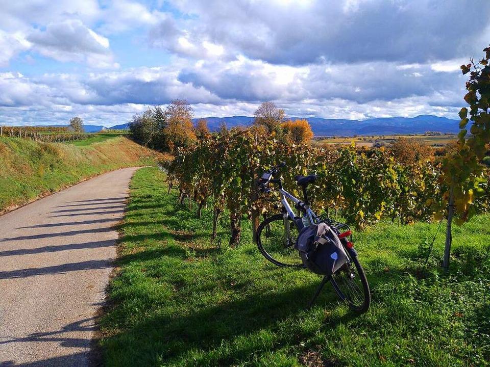 Radeln durch die Rebterrassen – die Berge  im Blick  | Foto: Andreas Strepenick