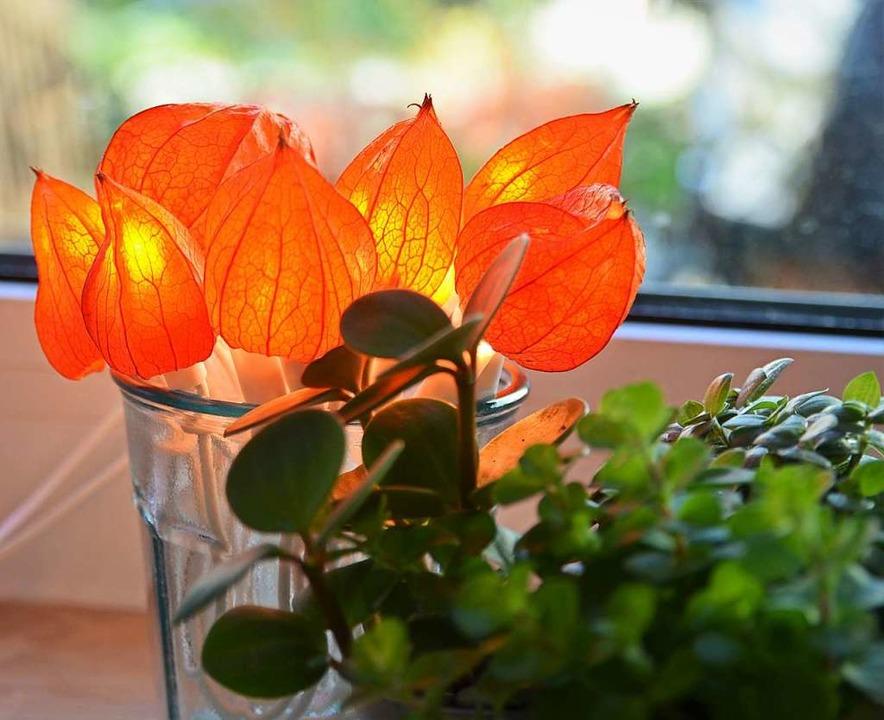 Orange-leuchtender Hingucker: LED-Lich...en Blüten der Lampionblume (Physalis).  | Foto: Silke Kohlmann
