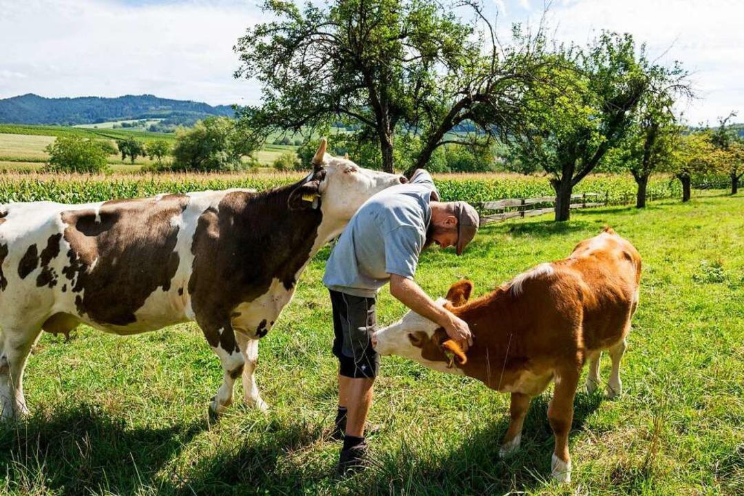 Zutraulich sind die Kühe bei Patrick O...d Wasser auch Streicheleinheiten gibt.    Foto: Daniel Schoenen