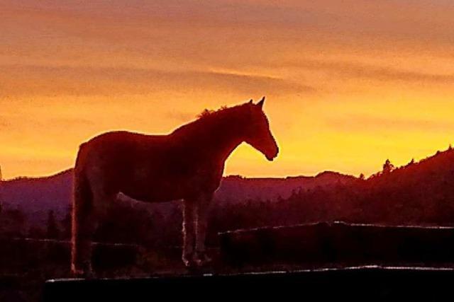 Wunderbarer Moment der Stille am Sonnenhof in Staufen