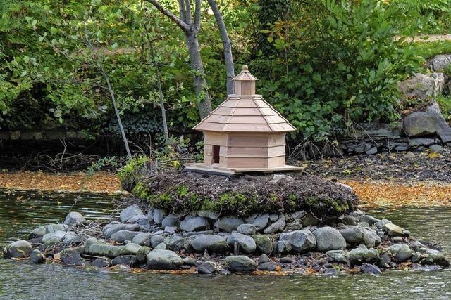 Die Staufener Enten haben am Stadtsee jetzt einen Tempel