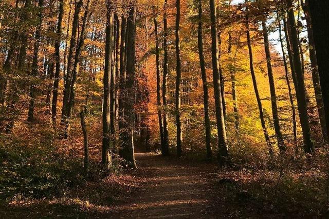 Bad Bellinger Gemeindewald macht im nächsten Jahr wohl Minus