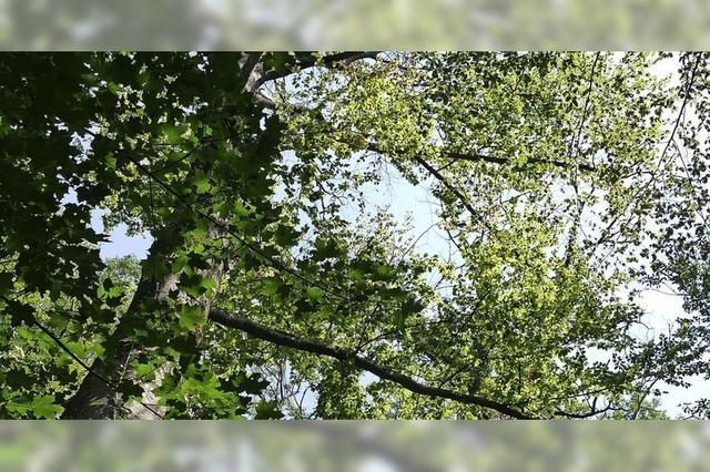 Landschaftsschutz geht vor