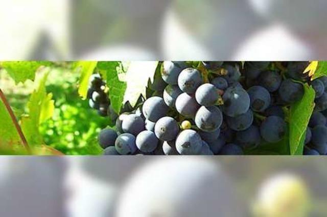 Die Badische Gebietswein- und Sektprämierung 2020