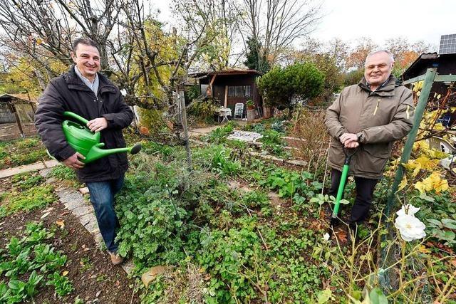 Kleingärten im Freiburger Westen sind seit 100 Jahren sehr begehrt