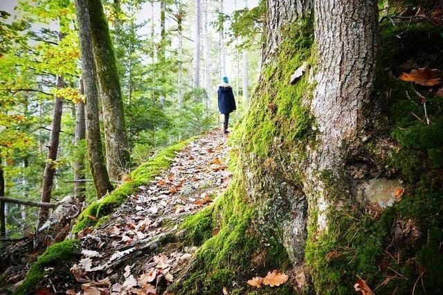 Eine Familientour durch den Zauberwald bei Buchenbach