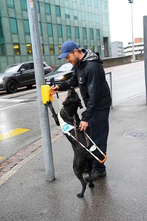 Das macht sie schon sehr gut: Blindenf...iva das Anzeigen einer Fußgängerampel.  | Foto: Annette Mahro