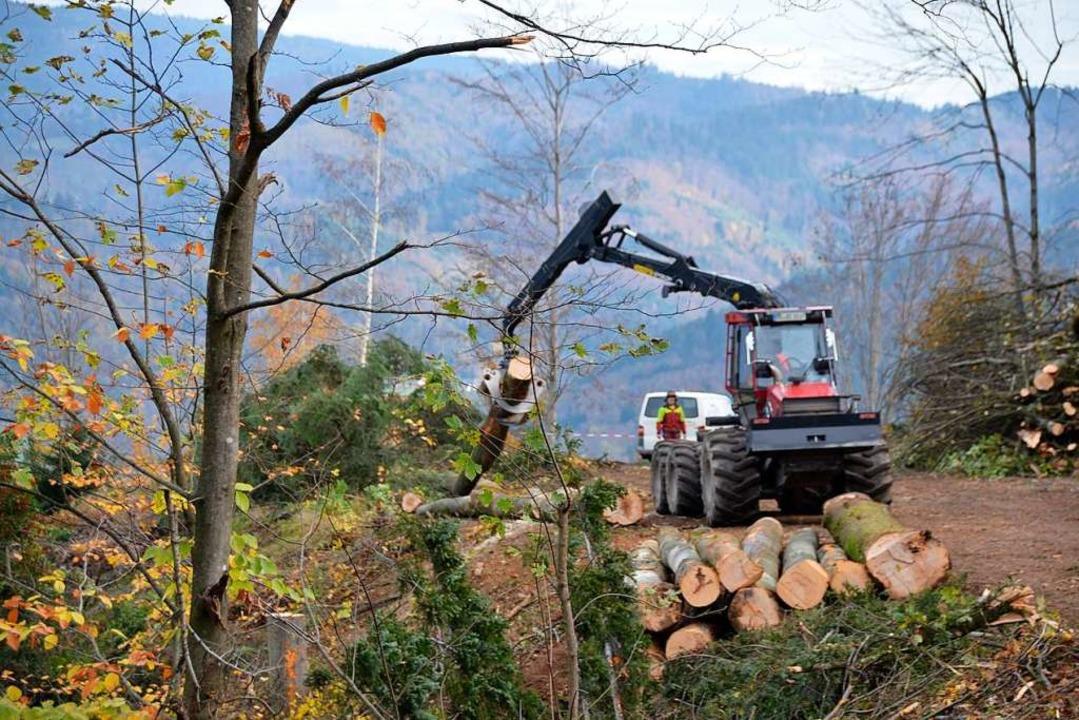 Viel Schadholz muss auch in der Ortenau aus dem Wald geholt werden.    Foto: Hubert Röderer