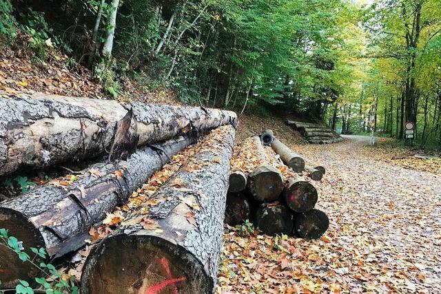 Bollschweil verdient nicht mehr am Gemeindewald