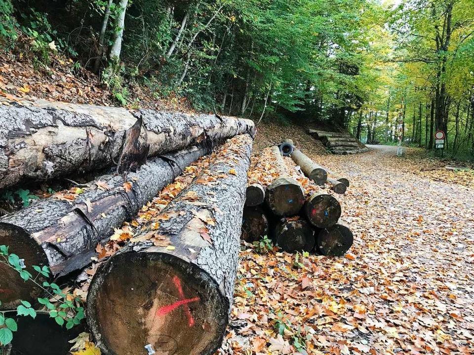 Die Preise für Holz sind im Keller.  | Foto: Gabriele Hennicke