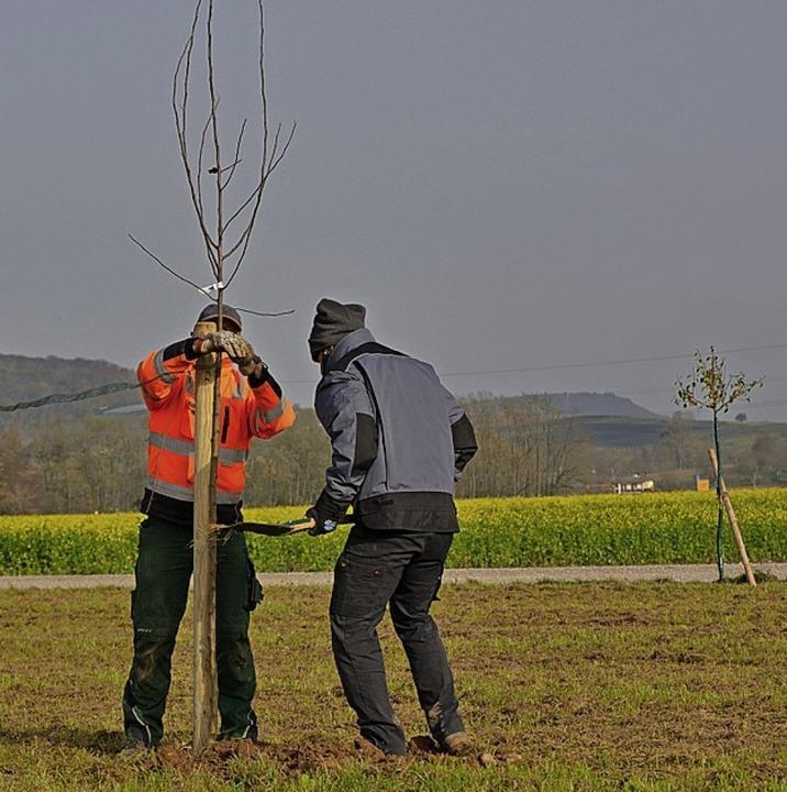 Die Natur- und Vogelfreunde sorgen für...wertung der  Natur  an der Bahnlinie.     Foto: Privat