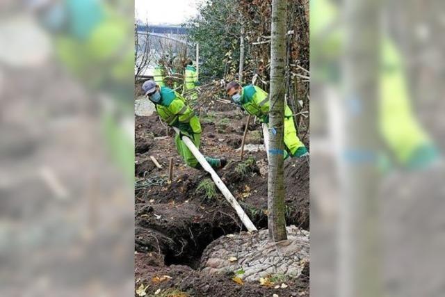 Neue Baumsorten für neues Klima