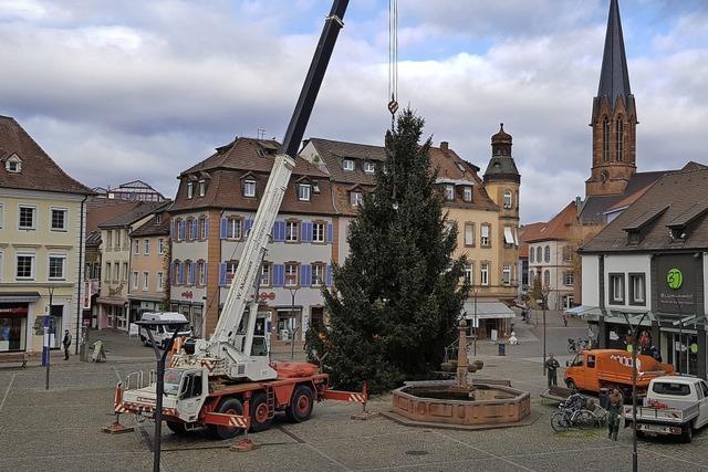 Emmendingens größter Christbaum steht