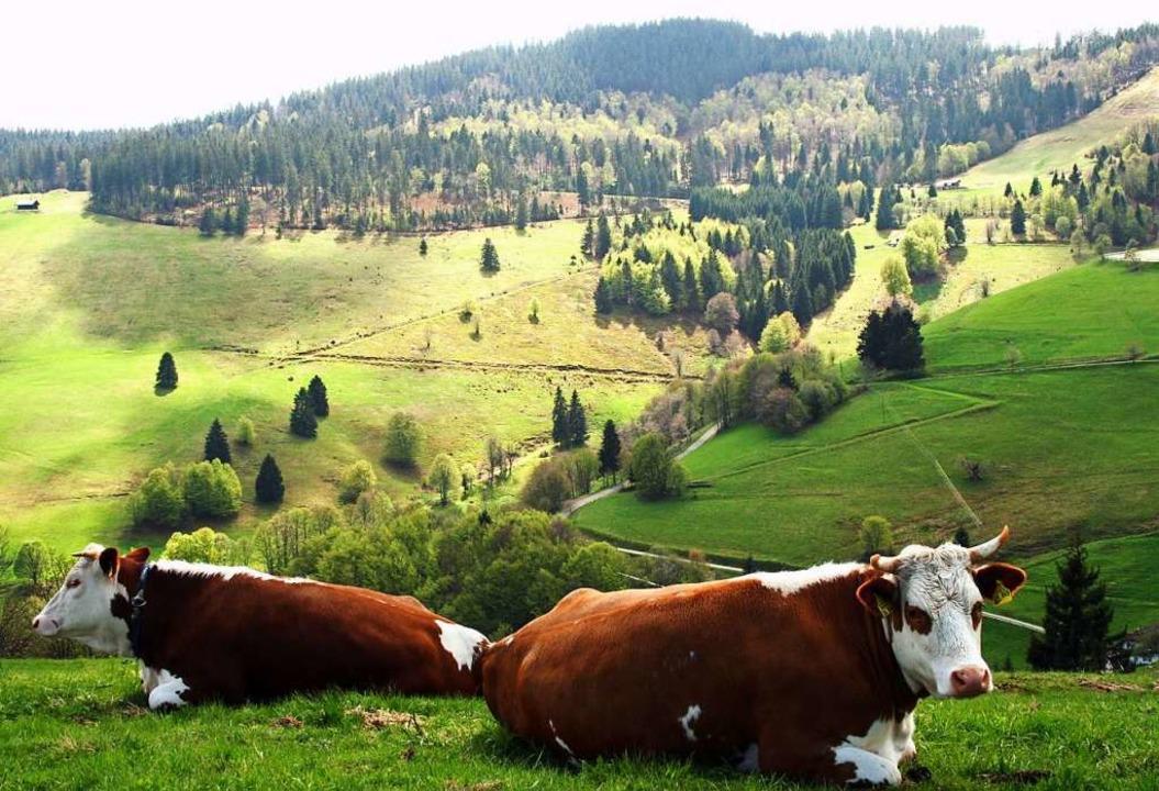 Landwirtschaft und Naturschutz müssen ...zt werden, findet Bernd-Jürgen Seitz.     Foto: Jörg Liesen