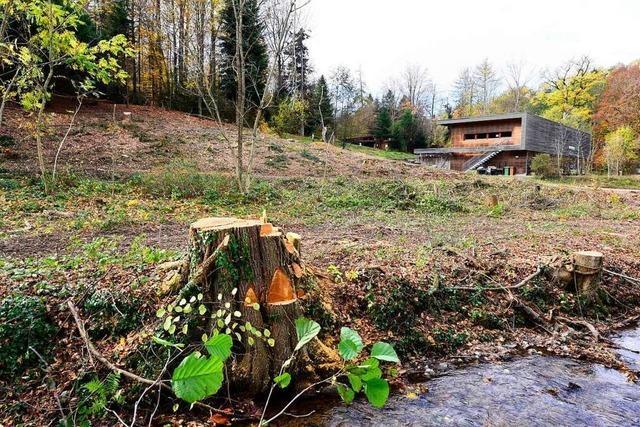 Freiburgs neues Forstamt entsteht am Waldrand – als Vierstöcker