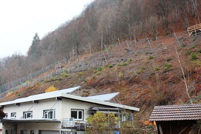 Der Bau des ersten Schutzzauns in Geschwend ist fast abgeschlossen