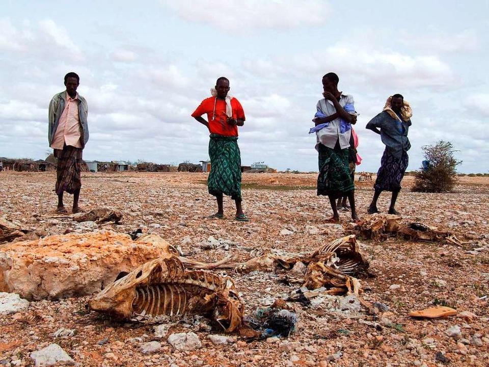 Somalische Hirten, die ihren gesamten ...n den Kadavern der Tiere (Archivbild).  | Foto: Badri Media (dpa)