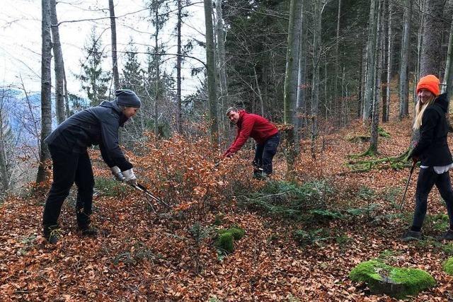 Mehr Licht und Platz für junge Bäume im Oberrieder Wald