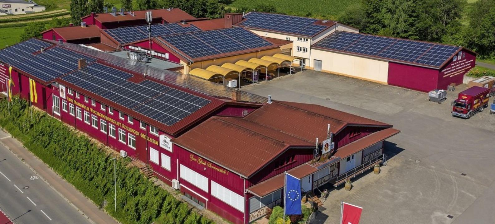 Auf dem Dach der Winzergenossenschaft wurden 1903 Photovoltaik-Module montiert.  | Foto: Erste Markgräfler Winzergenossenschaft Schliengen-Müllheim eG