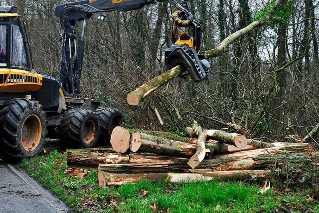 An den Heilquellen müssen acht Bäume gefällt werden