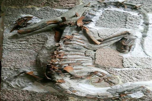 Forscher der Uni Bonn veröffentlichen Erkenntnisse über Dinosaurier