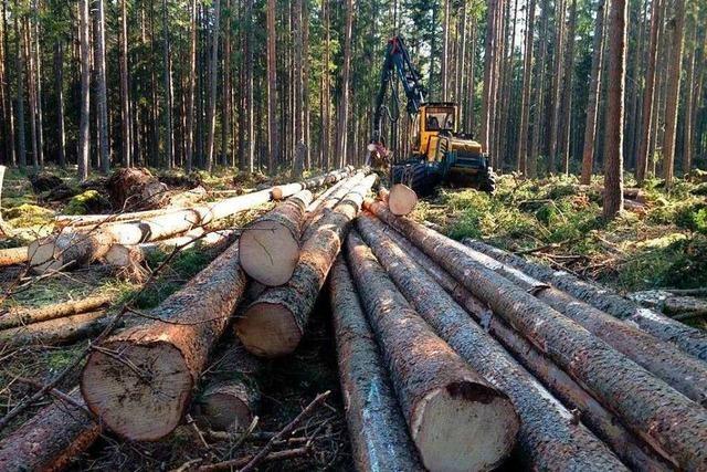 Forst bringt keinen Gewinn