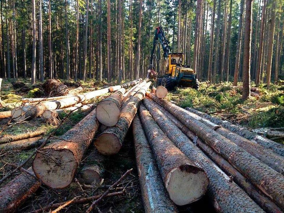 Die Aufarbeitung von Sturmholz beschäftige 2020 den Forst in Friedenweiler.    Foto: Liane Schilling