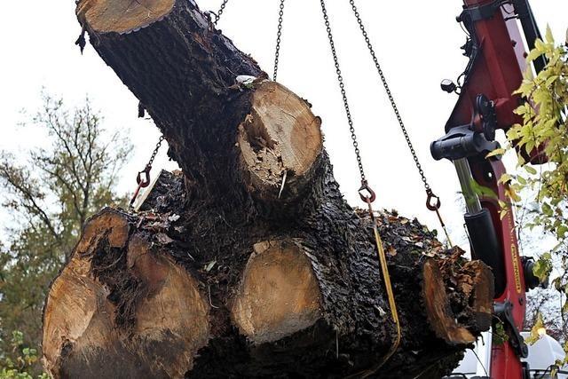 Toter Baum erfüllt neuen Zweck
