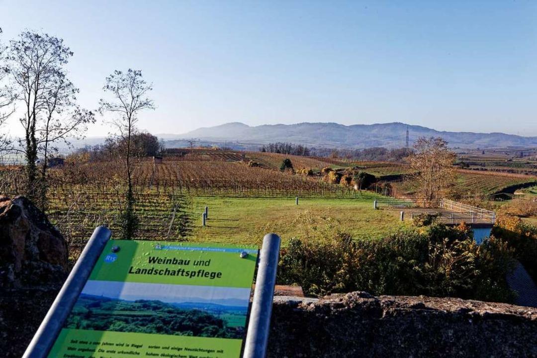 Auf dem Plateau auf dem Riegeler Micha...sung des regenerativ erzeugten Stroms.  | Foto: Martin Wendel