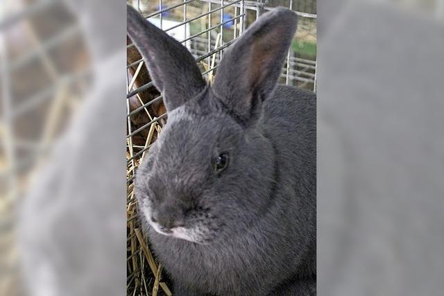 Tödliche Kaninchenseuche auf der Heidburg