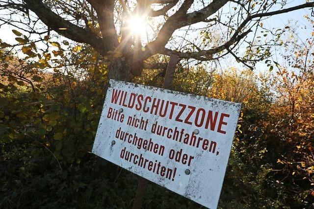 Die Ortenauer Grünen treten bei der geplanten Kreisstraße auf die Bremse