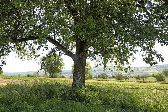 Ortschaftsrat Märkt lehnt Baumschutzsatzung ab