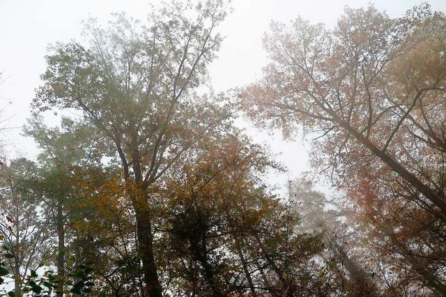 Die Forstwege im Gemeindewald in Auggen sollen saniert werden