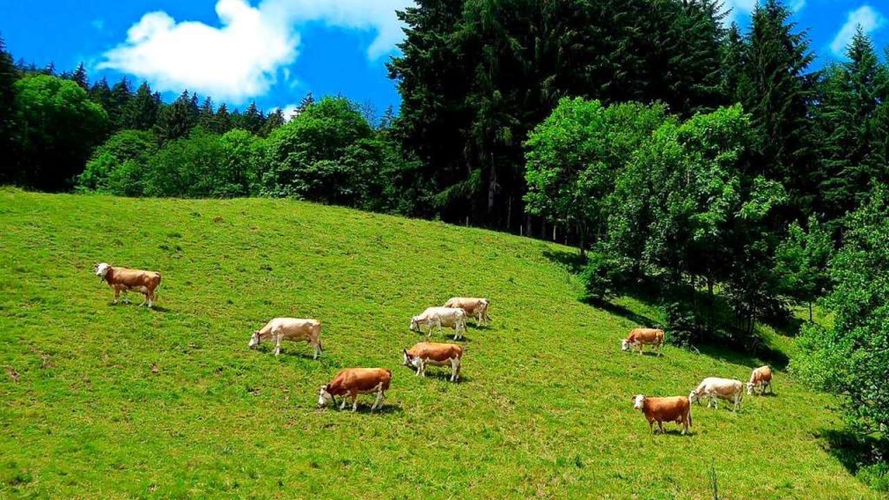Kühe auf einer Weide im Wiesental &#82...ne Arbeit, die schlecht entlohnt wird.  | Foto: Sonja Eiche