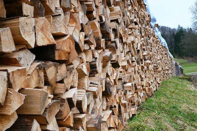 Der Bergwald in Todtnau soll sich verändern, aber das braucht viel Zeit