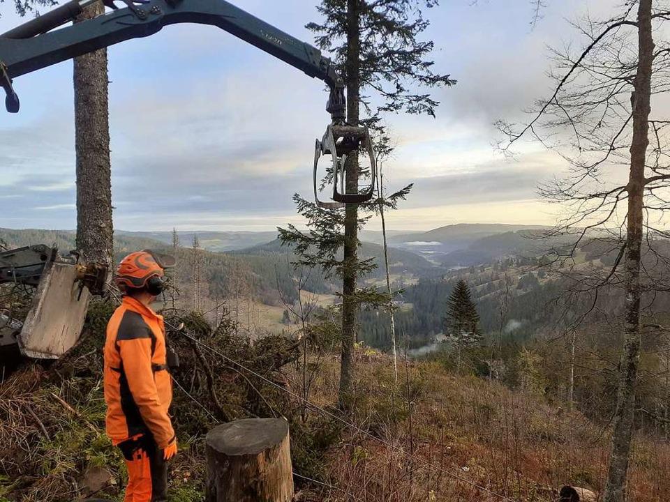 Das Zusammenspiel von Mensch und Masch...herungshieb oberhalb der B317 gefragt.  | Foto: Forstamt Kirchzarten