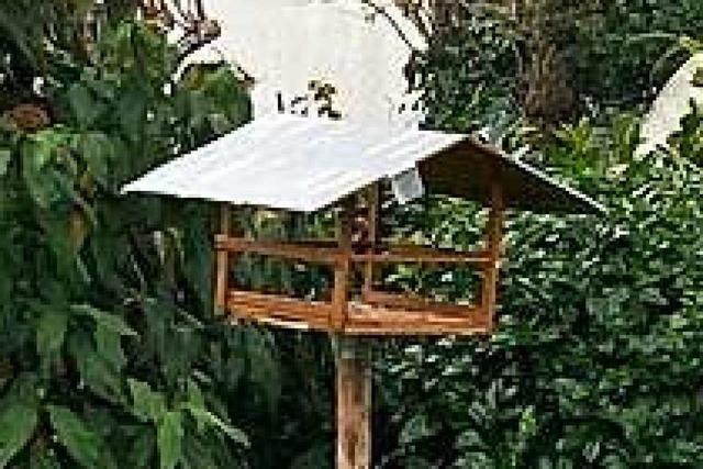 Paar vermisst die Vögel im Garten – War es eine sehr erfolgreiche Katze?