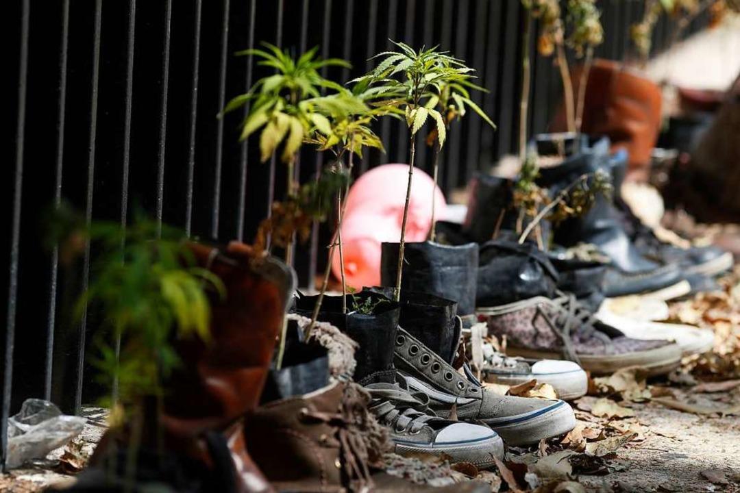 Marihuana-Pflanzen wachsen in Schuhen ...vor dem Senatsgebäude in Mexiko-Stadt.  | Foto: Eduardo Verdugo (dpa)