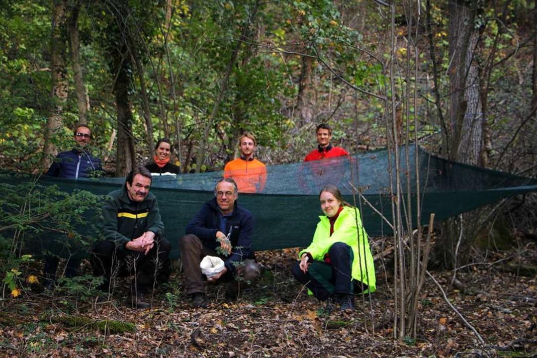 Mitarbeiter aus der Forstwirtschaft ha...chweinen oder Mäusen gefressen werden.  | Foto: Herbert Trogus