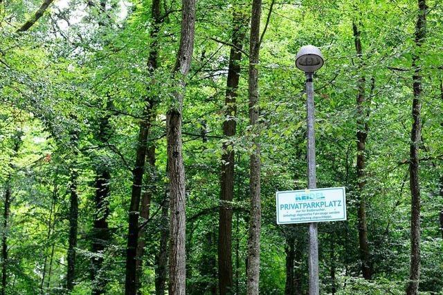 Ohne Gutachten werden keine Bäume gefällt