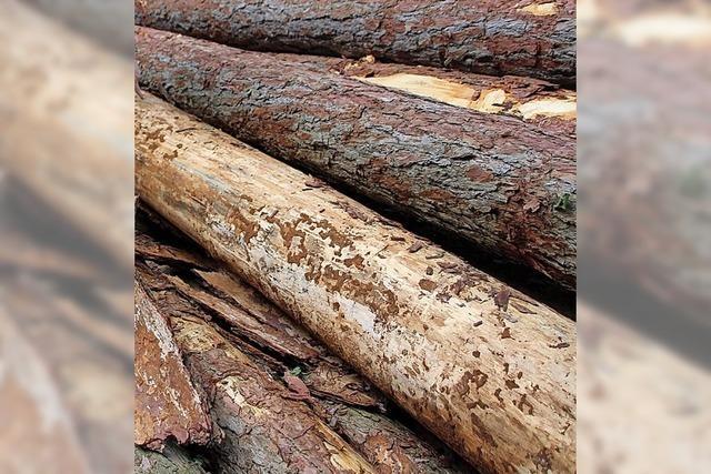 Als Bauholz richtig gut