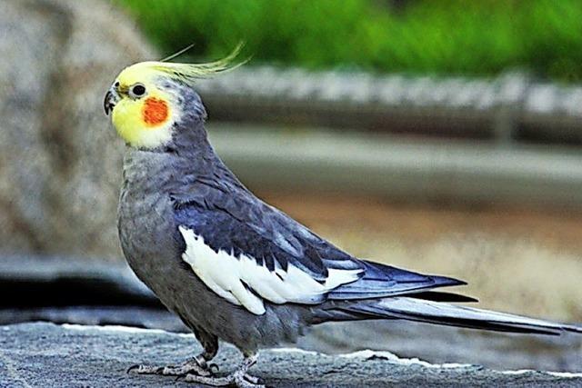 Ein freundlicher Vogel