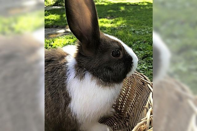 Haustier-Check: Die süßen Hoppler