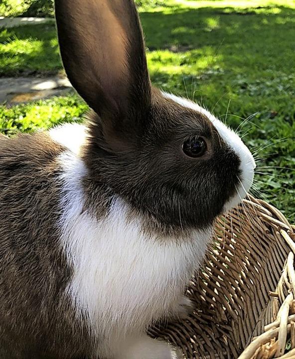Kaninchen im Korb    Foto: Privat