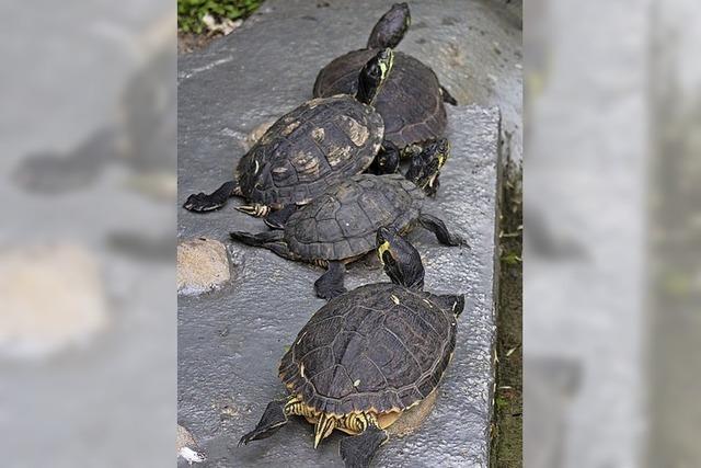 Tipps für Schildkrötenfreunde