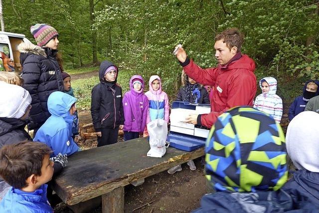 Eine Forschungsreise in den Herbstwald