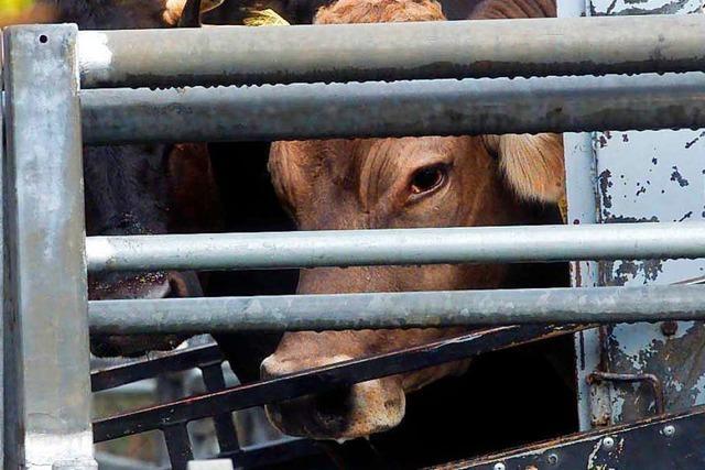 Soko Tierschutz dokumentiert wieder Horrorbilder aus Schlachthof