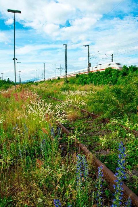 Die Gegner des Großprojektes verweisen...it Jahren brachliegenden Gleisfeldern.    Foto: Pressefoto Pro Natura Basel