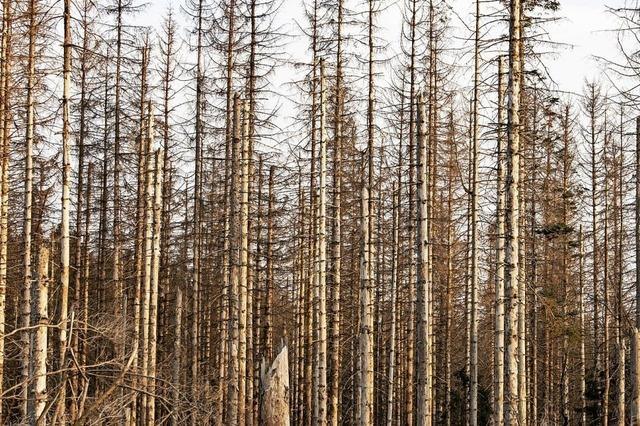 Zufälle setzen dem Wald mehr zu als früher